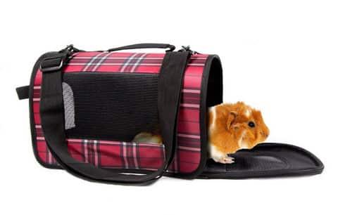 Vận chuyển chuột Hamster