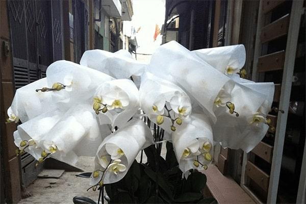 Cách vận chuyển hoa lan kiểng
